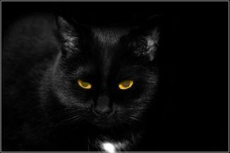 Feketemacska